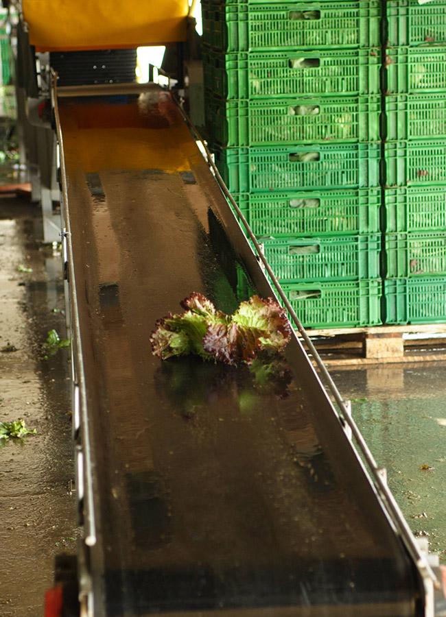 Maschinen für den Gemüsebau
